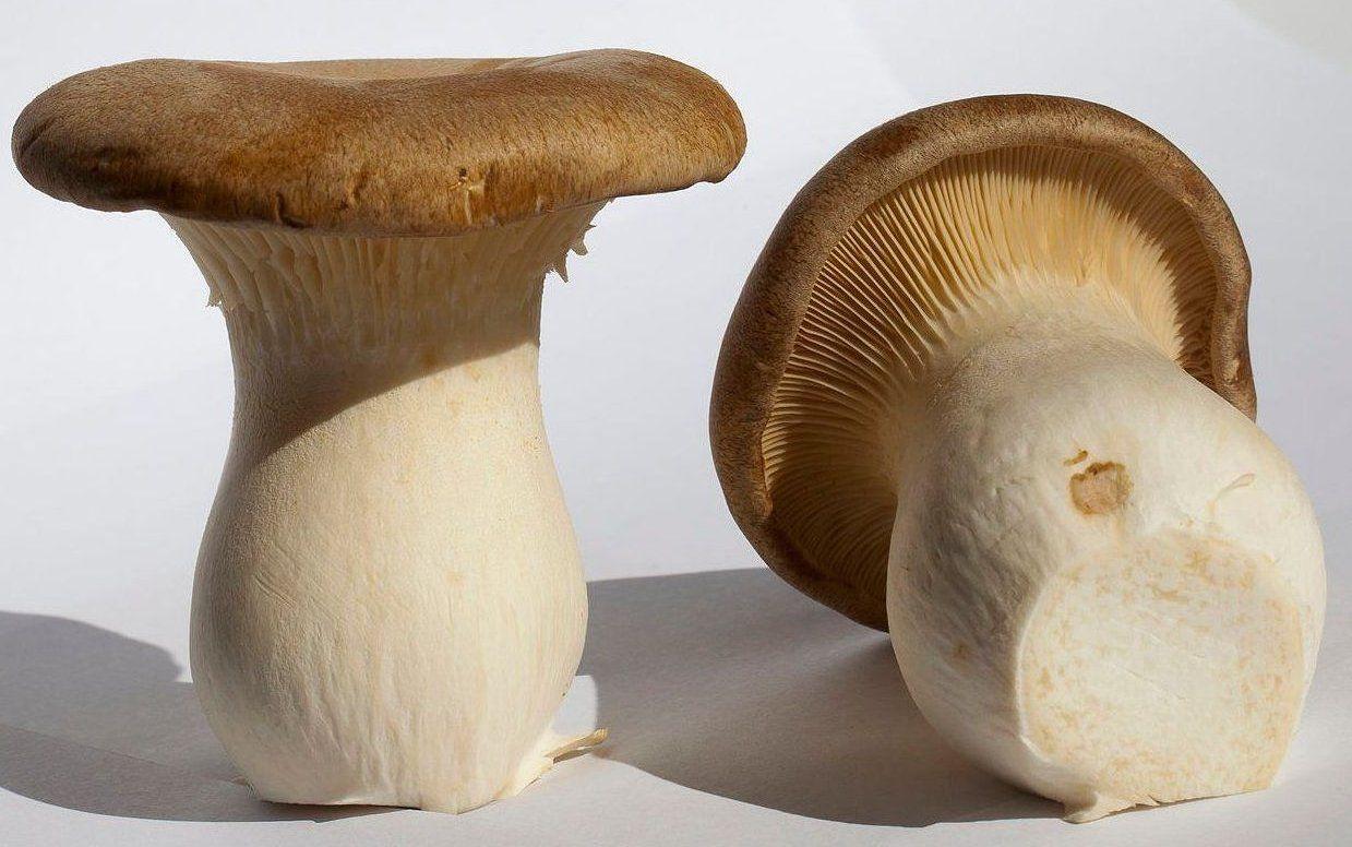 Setas de cardo: Productos de Mundifruit