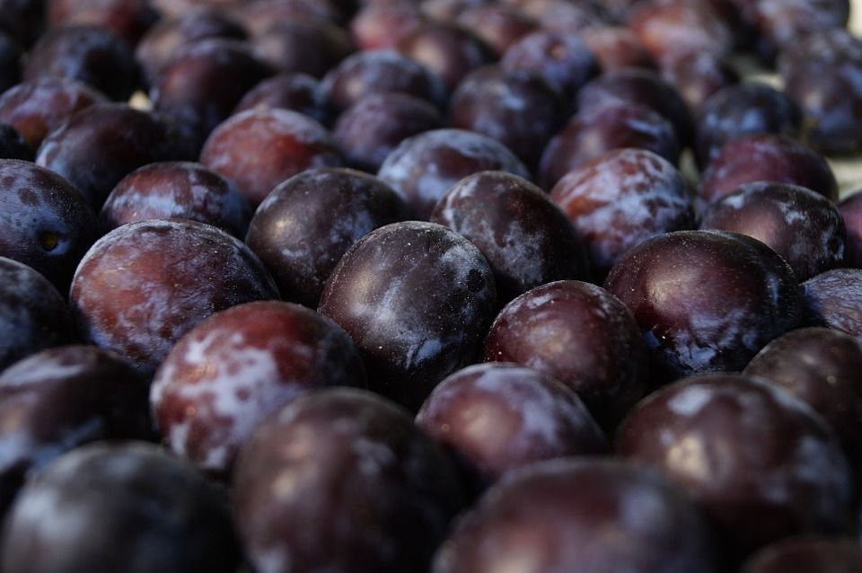 Ciruela roja: Productos de Mundifruit