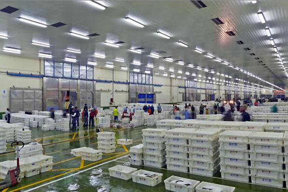 Nos abastecemos del pescado del puerto de Vigo