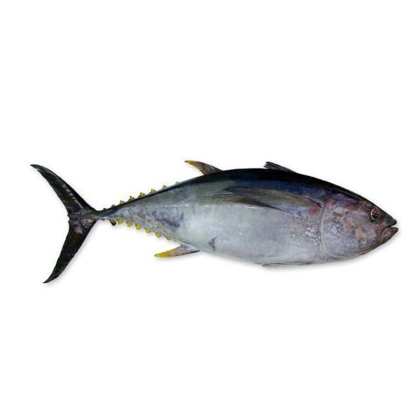 Peces grandes: Productos y Servicios de Peixes Vimar