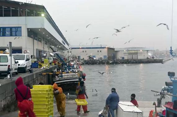 Detalle del puerto de Vigo. Descargando pescado