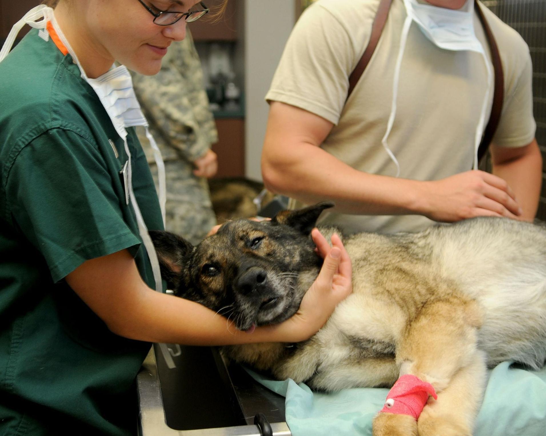 Clínica veterinaria con servicio de urgencias en Burgos