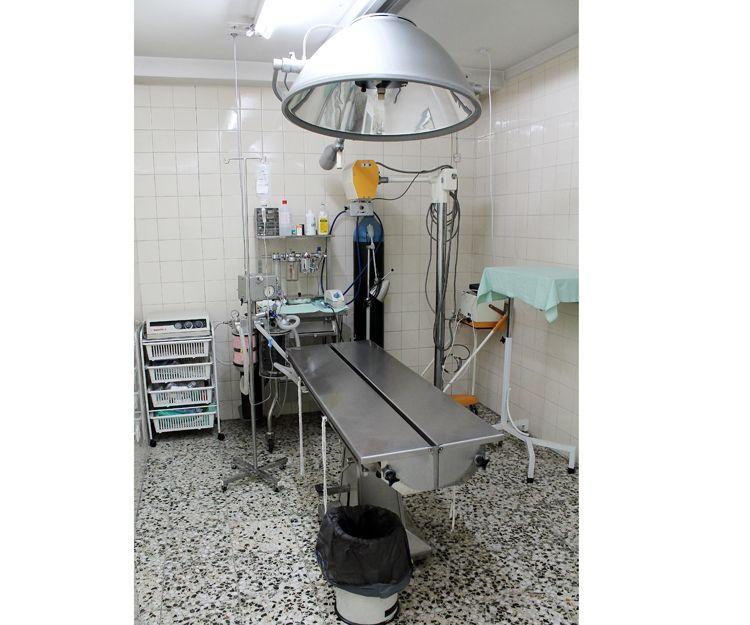 Campañas de vacunas para animales en Aluche