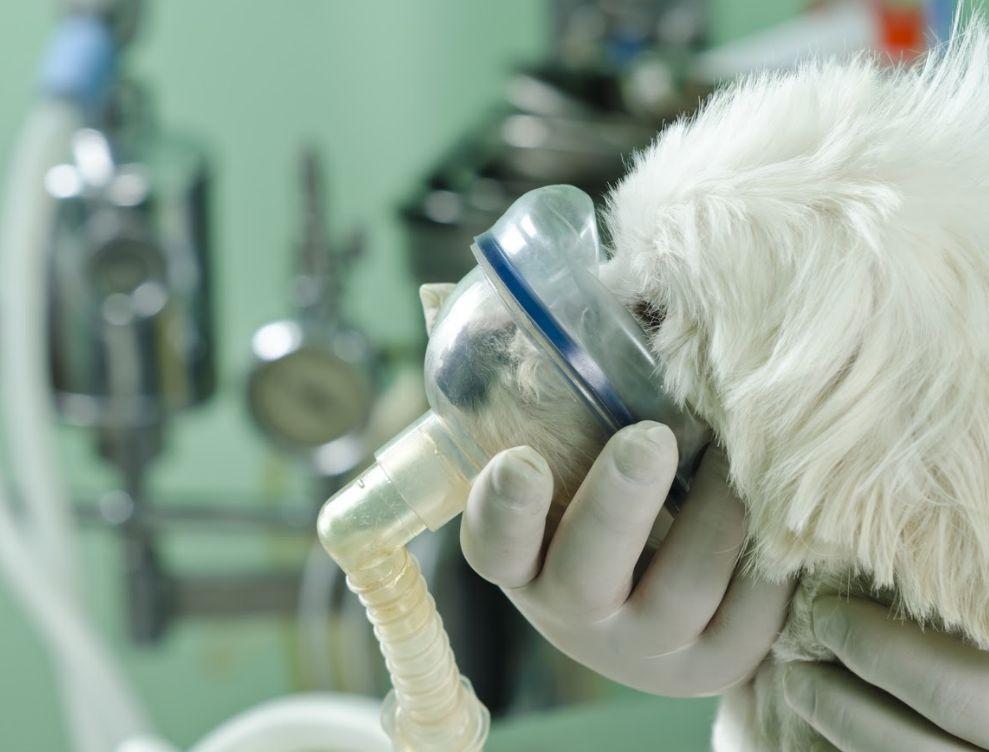 Cirugía general: Servicios de Clínica Veterinaria Parque Aluche