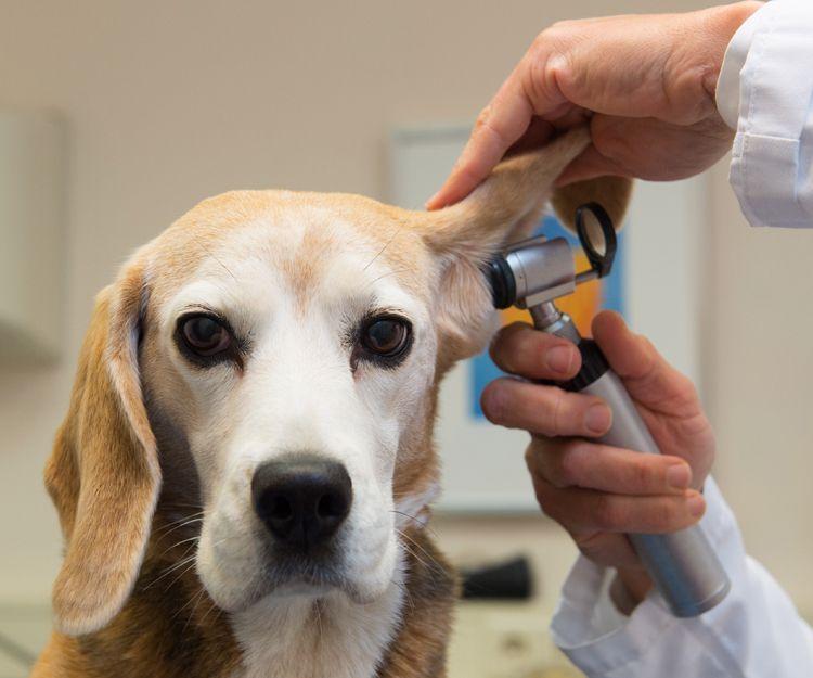 Atención veterinaria en Aluche