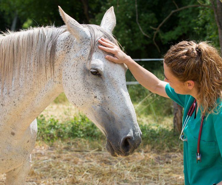 Clínica veterinaria en Aluche