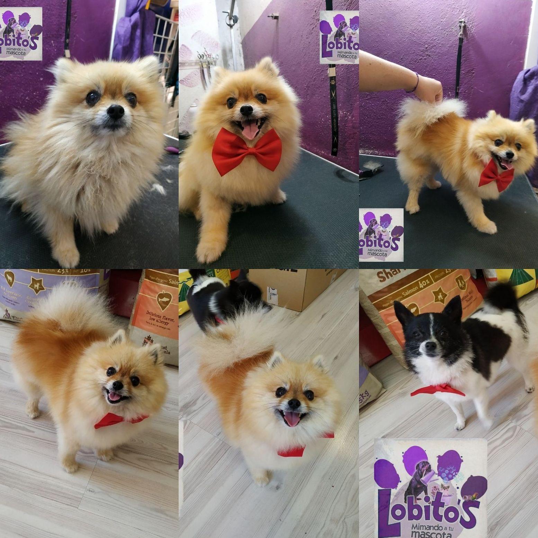 Tienda especializada en accesorios para mascotas