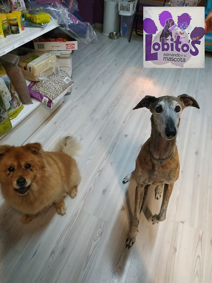 Peluquería y estética canina en Alicante