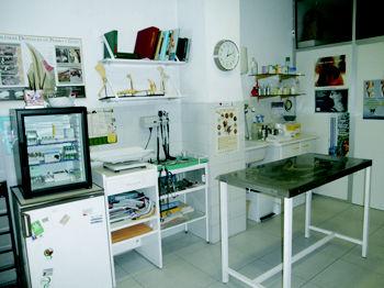 Foto 3 de Veterinarios en Galapagar | Clínica Veterinaria Galapagar