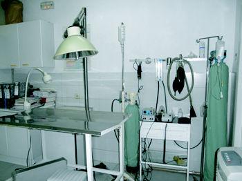 Foto 4 de Veterinarios en Galapagar | Clínica Veterinaria Galapagar