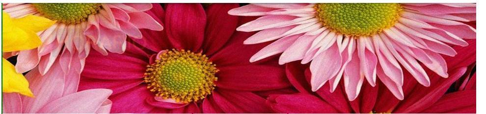 Foto 10 de Floristerías en Ordes | Flores Abellá