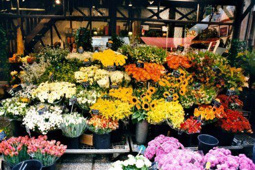 Flor cortada: Catálogo de Flores Abellá
