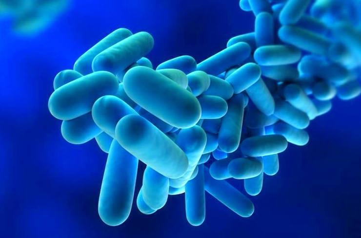 El XV Congreso de Salud Ambiental se centra en la prevención y control de la Legionella