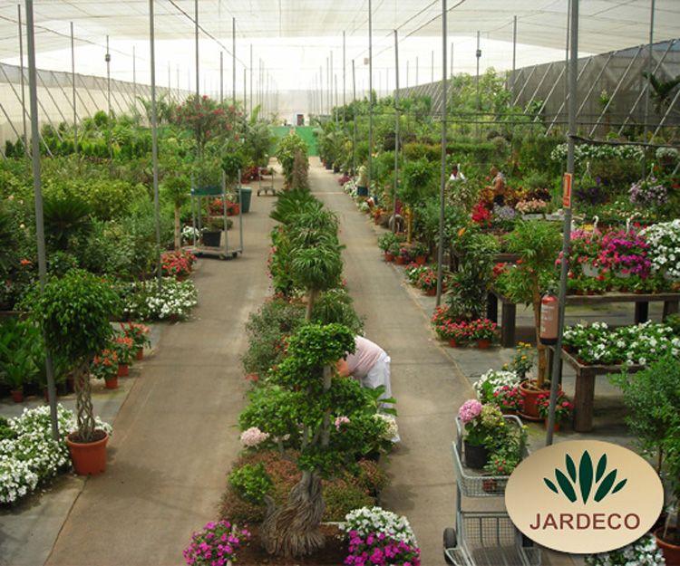 Diseño de jardines en Tenerife