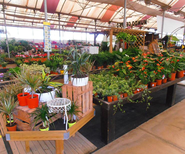 Gran variedad de plantas de interior en Tenerife