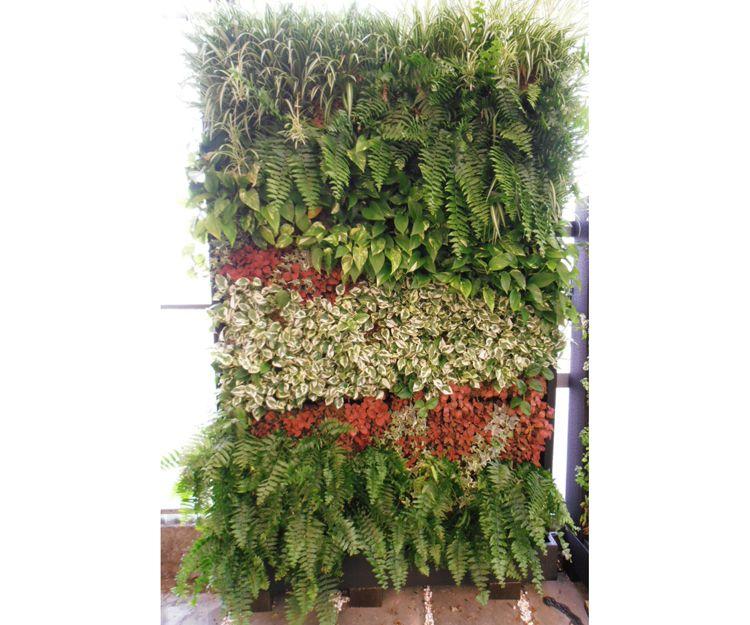 Oferta para jardines verticales en Tenerife