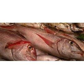 Pedidos: Productos de Pescadería Aparicio