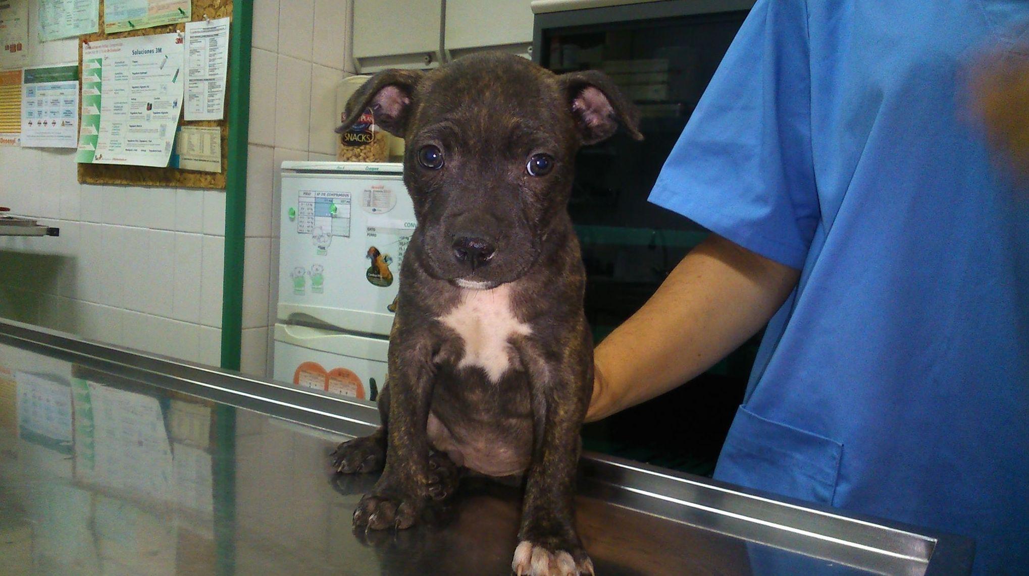 Clínica veterinaria en León
