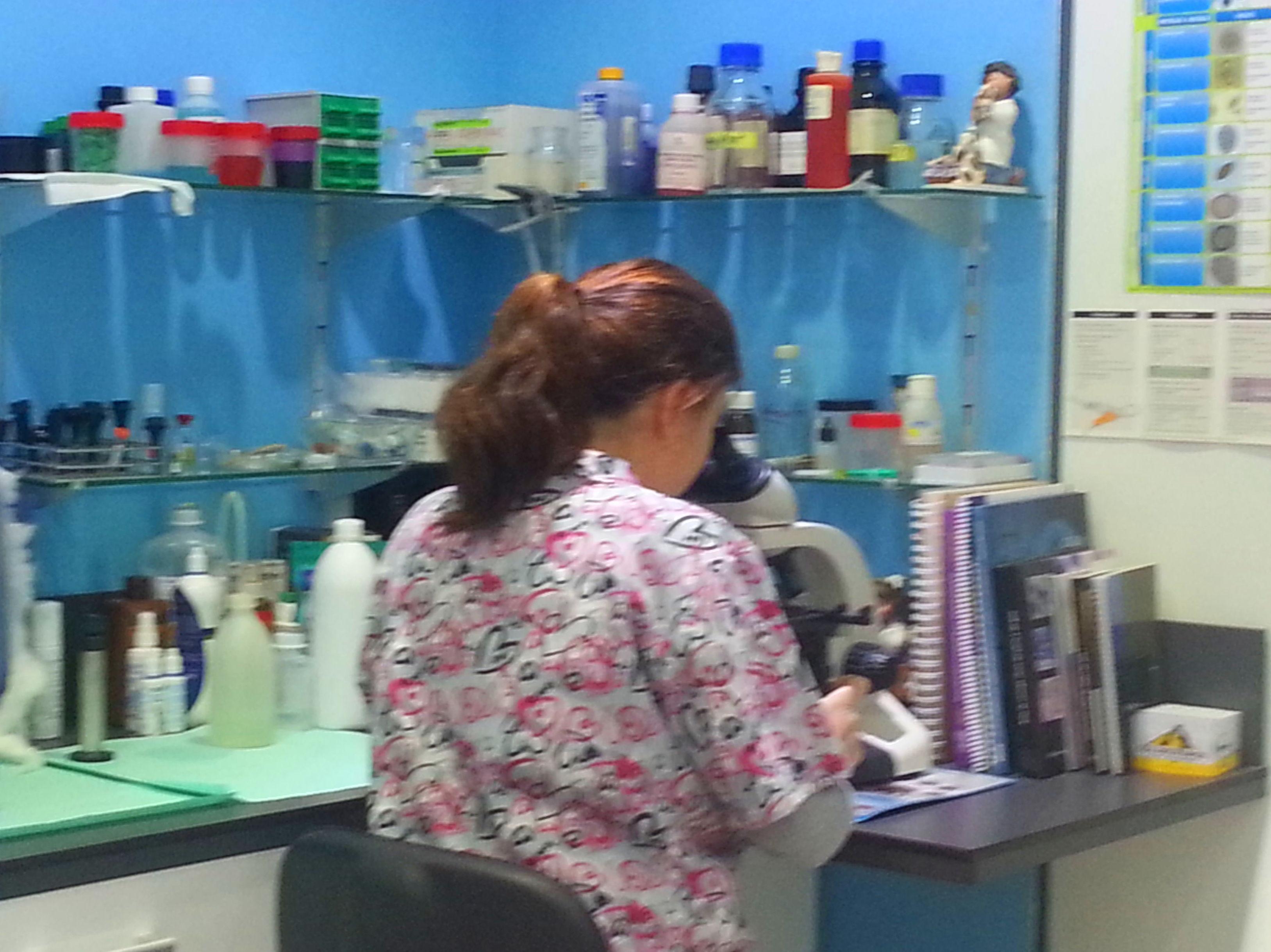 Foto 10 de Veterinarios en León | Clínica Veterinaria Ricardo Díez Reyero