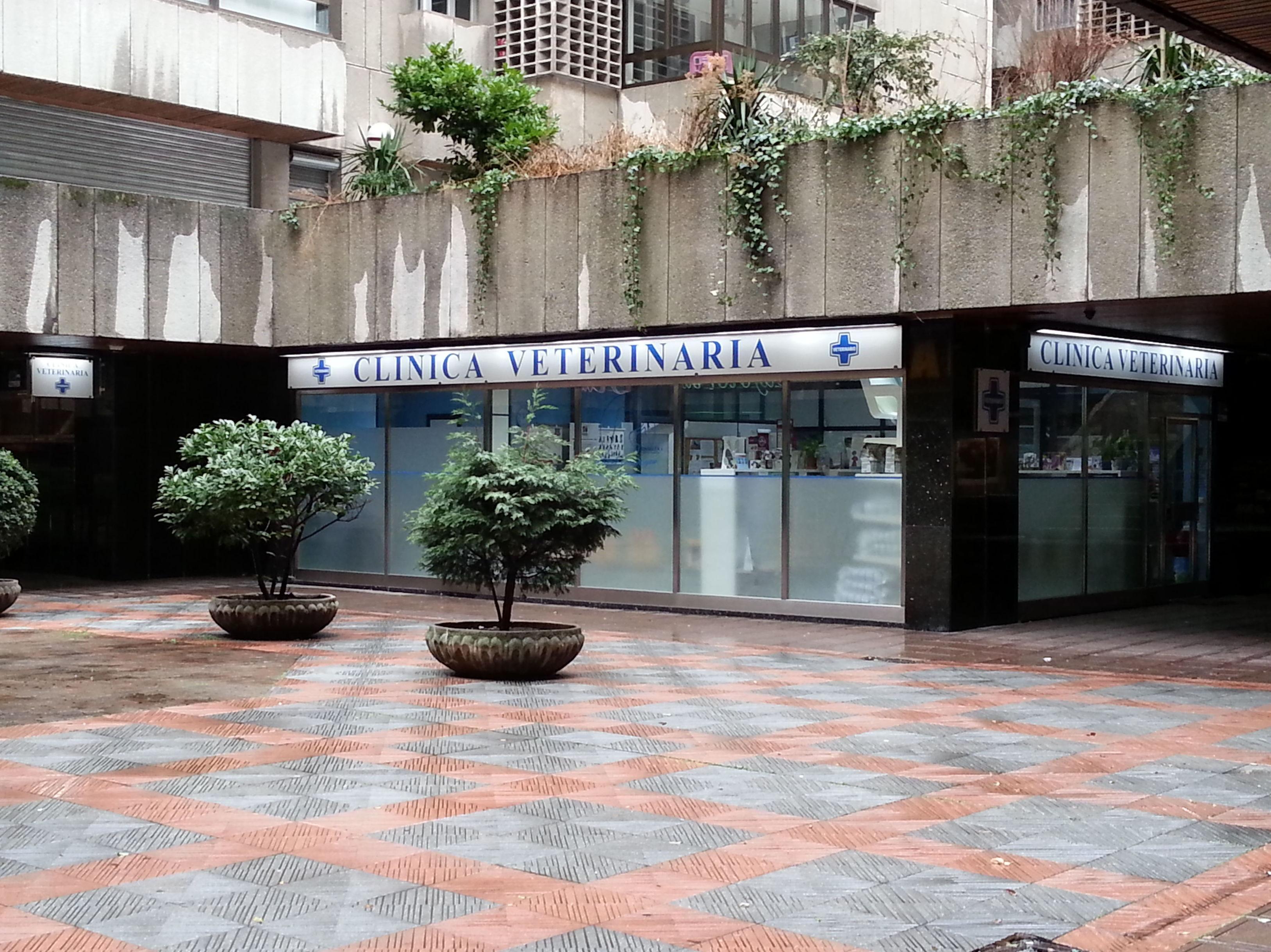 Foto 4 de Veterinarios en León | Clínica Veterinaria Ricardo Díez Reyero