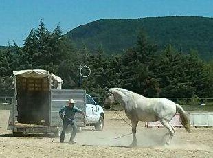 Foto 14 de Centro de equitación y equinoterapia en Labiano | Centro de Equitación y Equinoterapia Biki Blasco