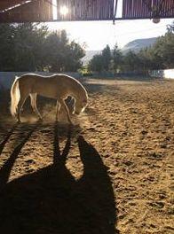 Foto 4 de Centro de equitación y equinoterapia en Labiano | Centro de Equitación y Equinoterapia Biki Blasco