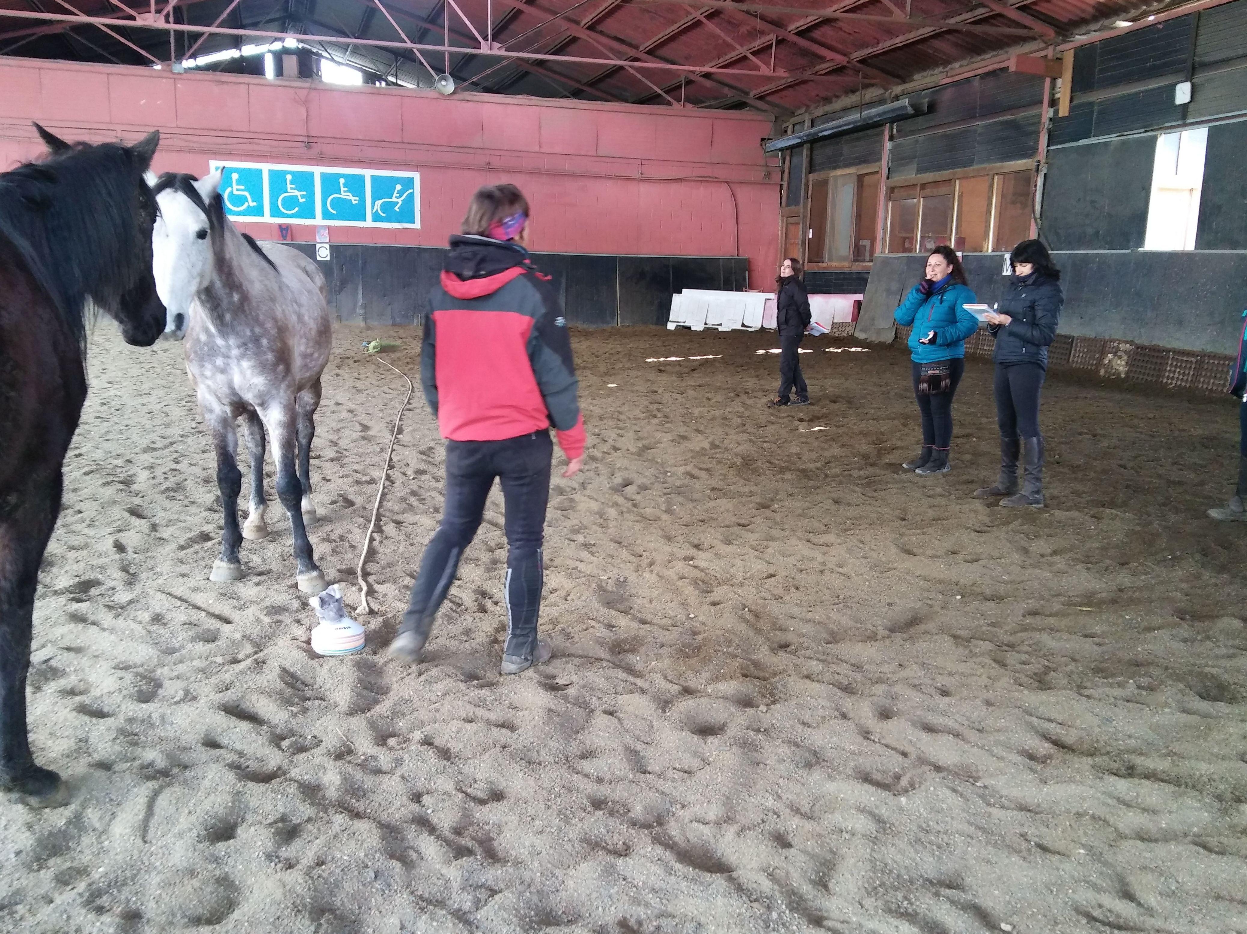 Aprendizaje con caballos: Servicios de Centro de Equitación y Equinoterapia Biki Blasco