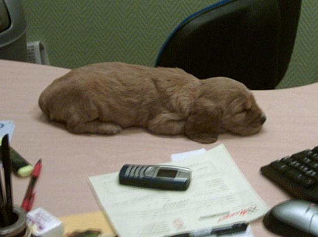 Cachorro en nuestra clínica