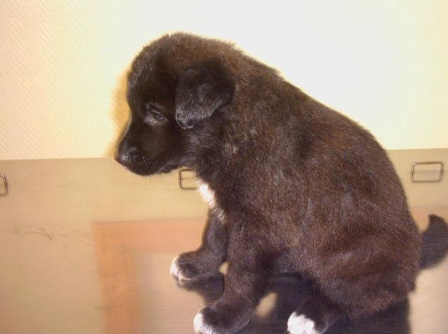 Clínica veterinaria de perros