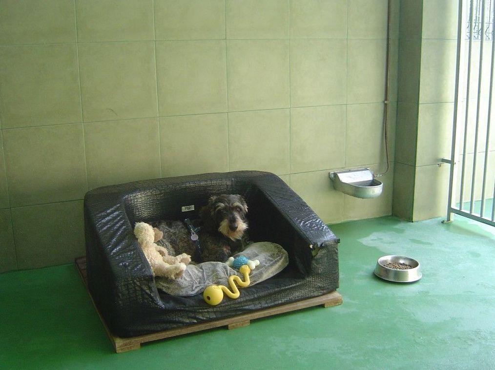 Residencia canina en Bizkaia