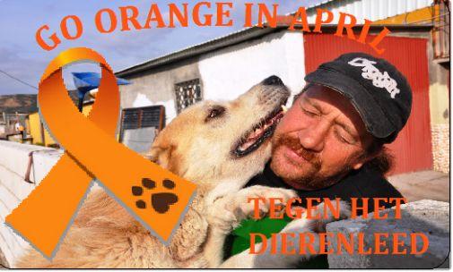 Fundación de ayuda a los perros en La Línea de la Concepción