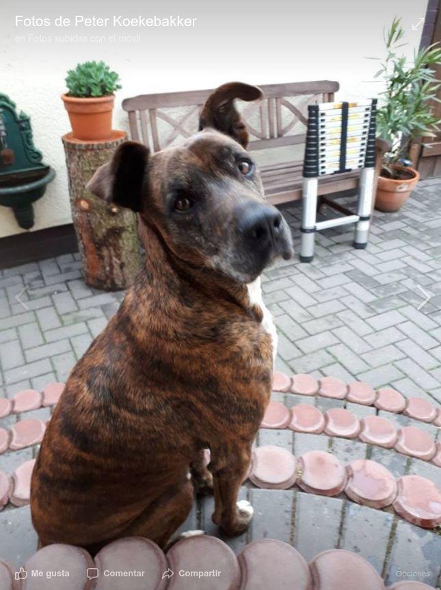 Adopta un perro en La Línea de la Concepción