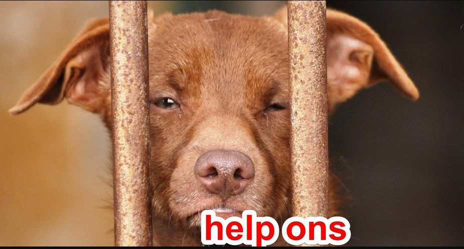 Ayuda a proteger los derechos de los animales en La Línea de la Concepción