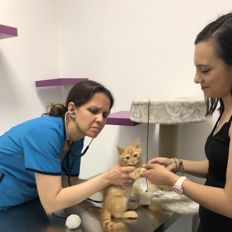 Foto 39 de Especialistas en perros y gatos en Montcada i Reixac | Huellas Centro Veterinario