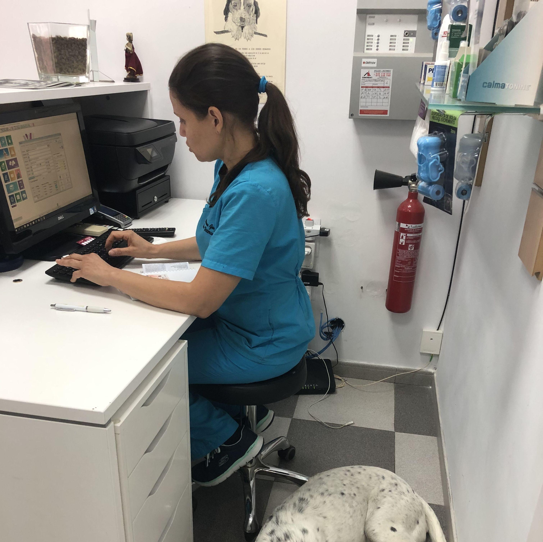 Foto 23 de Especialistas en perros y gatos en Montcada i Reixac | Huellas Centro Veterinario