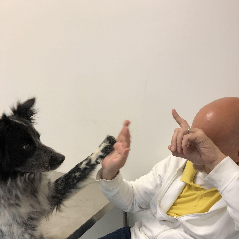 Foto 10 de Especialistas en perros y gatos en Montcada i Reixac | Huellas Centro Veterinario