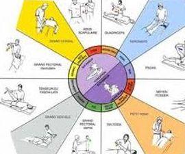 Kinesiología Rueda Muscular (Test)