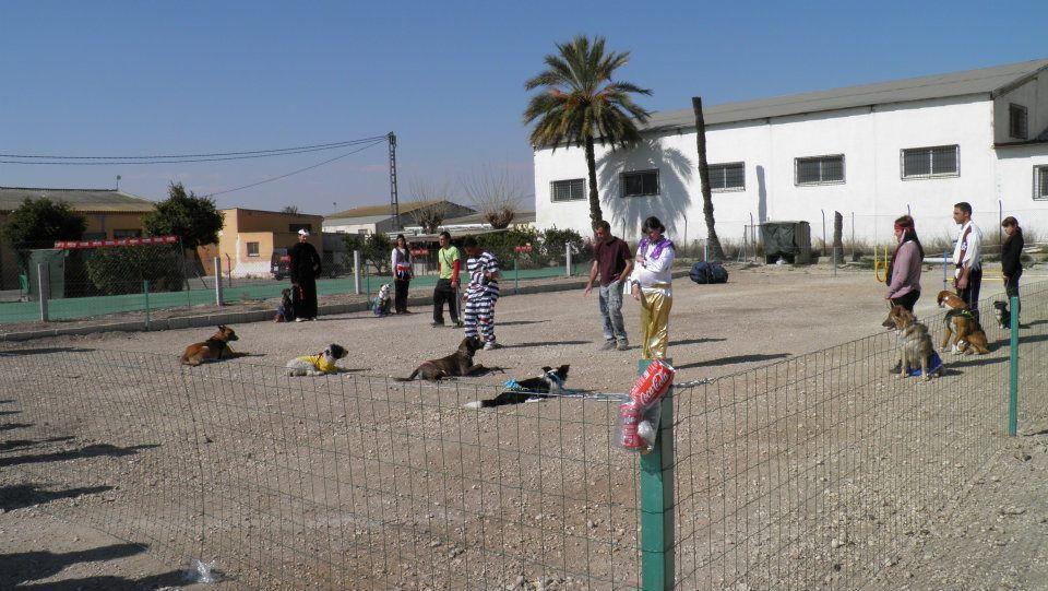 Carnaval Canino 2012