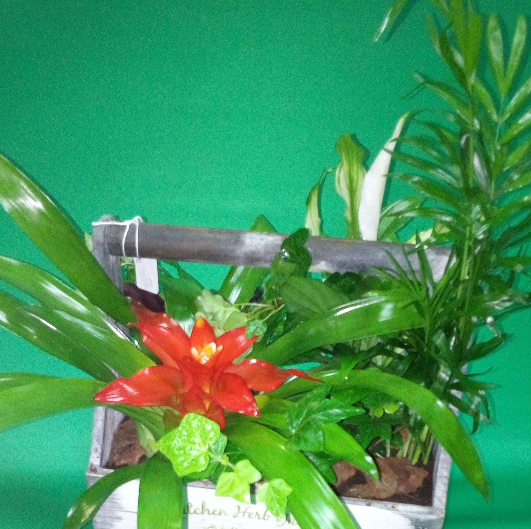 Plantas: Productos of Floristería La Salud