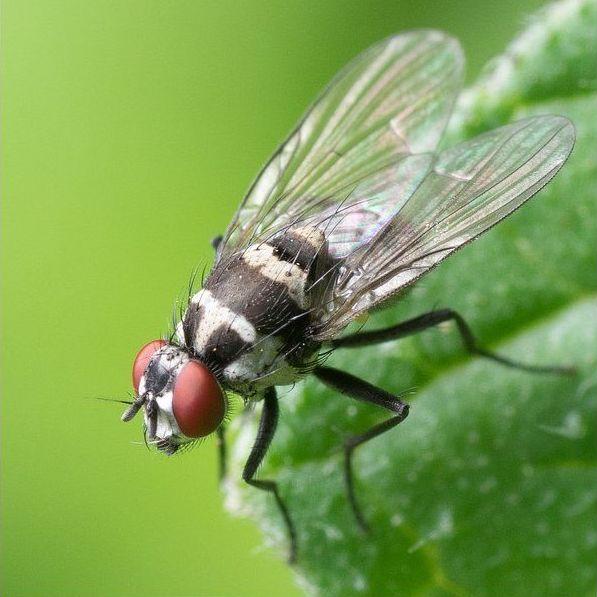 Tratamientos contra insectos voladores en Barcelona