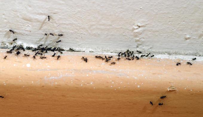 Consejos para combatir plagas de hormigas este verano