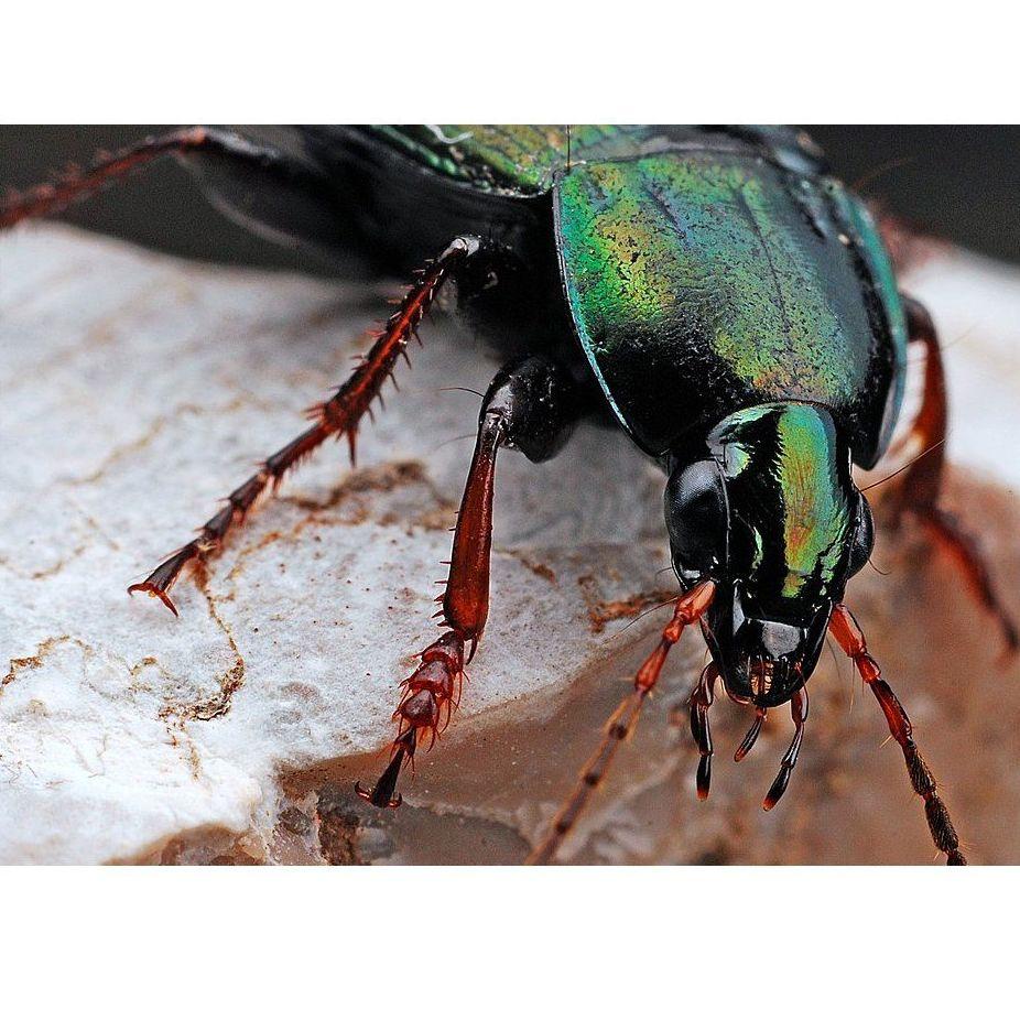Eliminación de insectos de productos almacenados