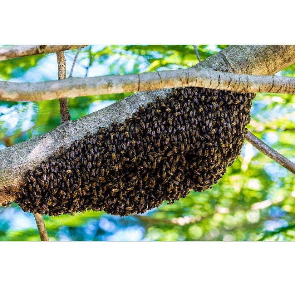 Servicios de eliminación de nidos y asentamientos de avispas en Barcelona