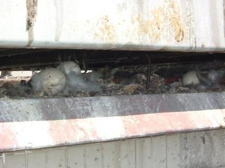 Peligros de las palomas para los edificios
