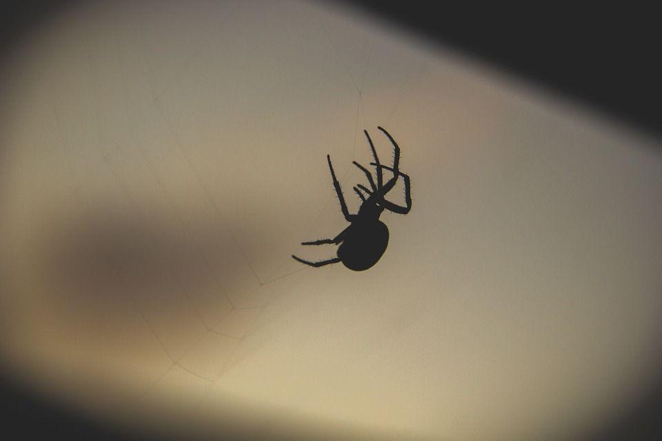 Exterminación de arañas