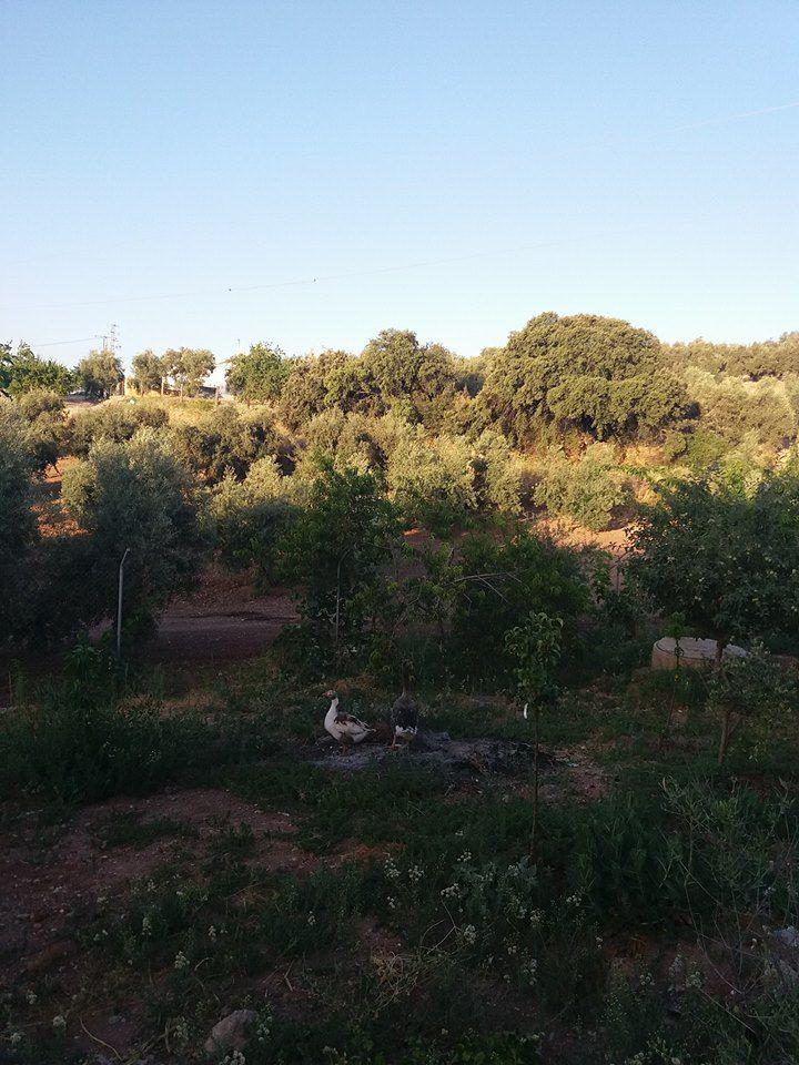 Paraje Endrinal en Archidona