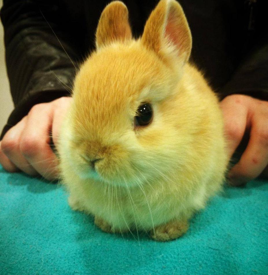 Revisión veterinaria de mascotas