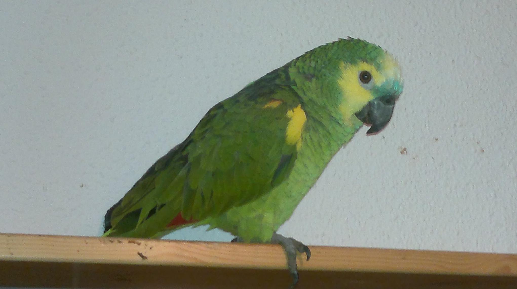 Veterinario de aves