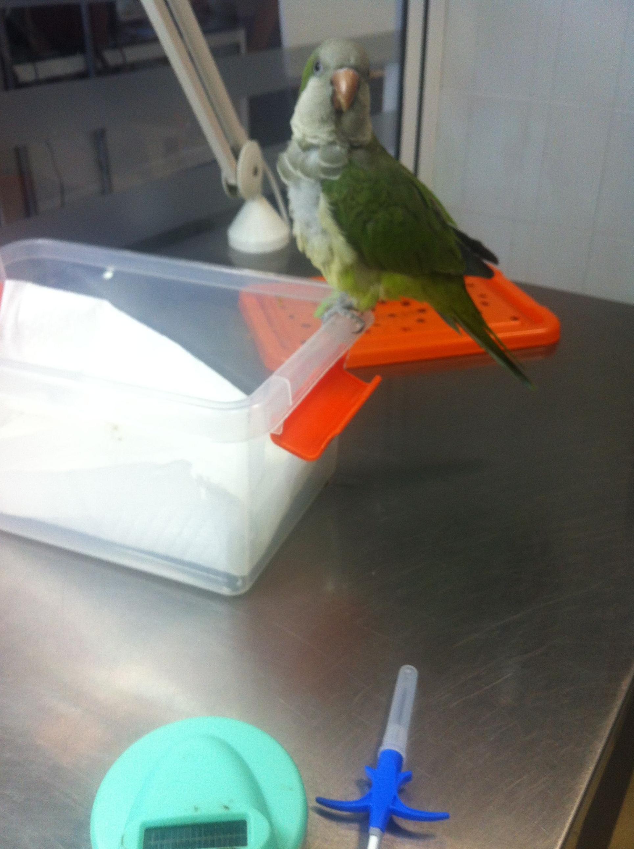 Foto 12 de Veterinarios en San Antonio Benageber | Clinica Veterinaria Tot Exotics Zoolandia