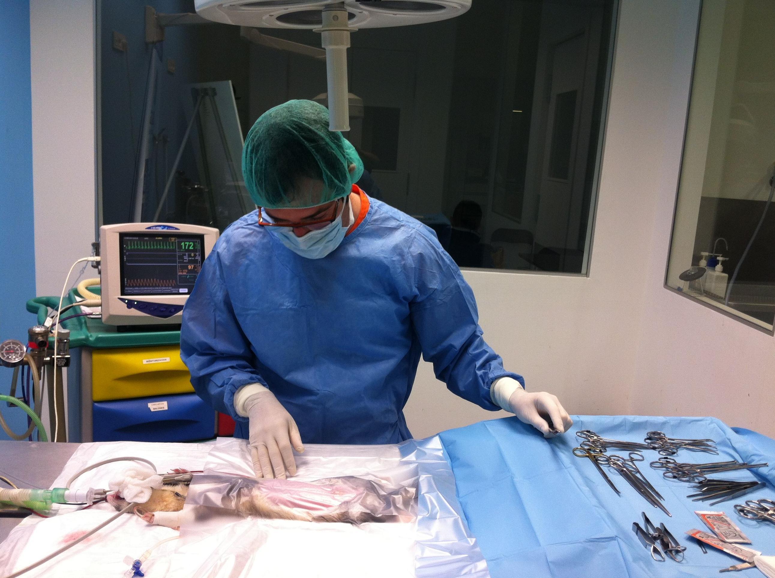 Foto 24 de Veterinarios en San Antonio Benageber | Clinica Veterinaria Tot Exotics Zoolandia